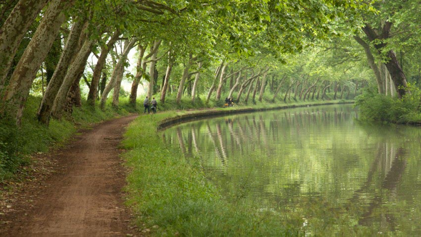 platanes canal midi toulouse 850x478